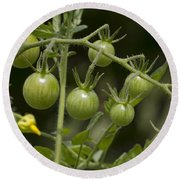 Green Cherry Tomatoes On The Vine Round Beach Towel