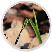 Green Dragonfly On Grass Square Round Beach Towel