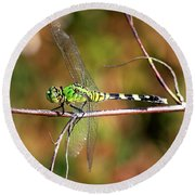 Green Dragonfly On Twig Square Round Beach Towel