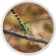 Green Dragonfly Square Round Beach Towel