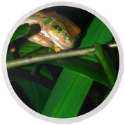 Green Eye'd Frog Round Beach Towel