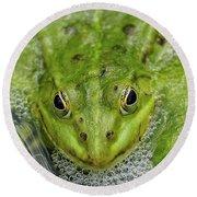 Green Frog Round Beach Towel by Matthias Hauser