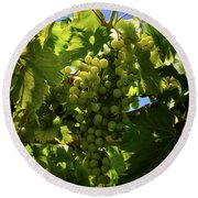 Green Grapes On The Vine Round Beach Towel