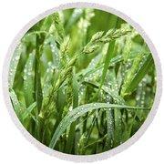 Green Grass After Rain Round Beach Towel