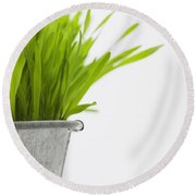 Green Grass In A Pot Round Beach Towel