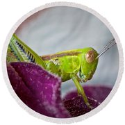 Green Grasshopper I Round Beach Towel