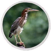 Green Heron 2 Round Beach Towel