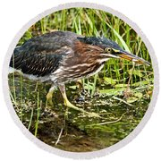 Green Heron And Catch Round Beach Towel