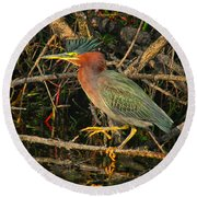 Green Heron Basking In Sunlight Round Beach Towel