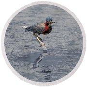 Green Heron In Swannanoa North Carolina Round Beach Towel