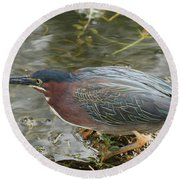 Green Heron On The Lookout Round Beach Towel