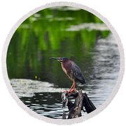 Green Heron Perch Round Beach Towel