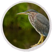 Green Heron Pictures 378 Round Beach Towel