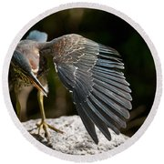 Green Heron Pictures 382 Round Beach Towel