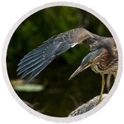 Green Heron Pictures 386 Round Beach Towel