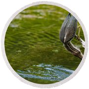 Green Heron Pictures 414 Round Beach Towel