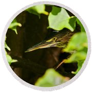 Green Heron Pictures 430 Round Beach Towel