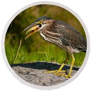 Green Heron Pictures 457 Round Beach Towel