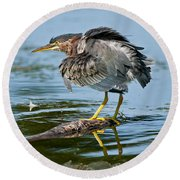 Green Heron Pictures 469 Round Beach Towel