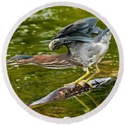 Green Heron Pictures 522 Round Beach Towel