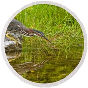 Green Heron Pictures 534 Round Beach Towel