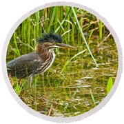 Green Heron Pictures 545 Round Beach Towel