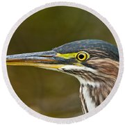 Green Heron Pictures 548 Round Beach Towel