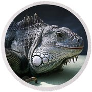 Green Iguana 1 Round Beach Towel