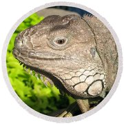 Green Iguana Face Round Beach Towel