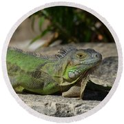 Green Iguana Lizard Round Beach Towel