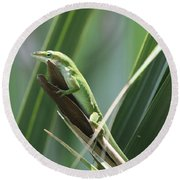 Green Lizard Round Beach Towel