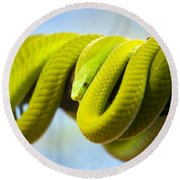Green Mamba Coiled Up On A Branch Round Beach Towel