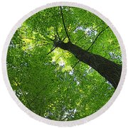 Green Maple Canopy Round Beach Towel