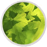 Green Maple Leaves Round Beach Towel