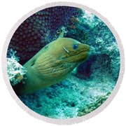 Green Moray Eel With Cleaning Fish Round Beach Towel