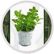 Green Oregano Herb In Small Pot Round Beach Towel