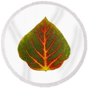 Green Red And Yellow Aspen Leaf 4 Round Beach Towel