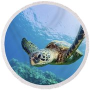 Green Sea Turtle - Maui Round Beach Towel