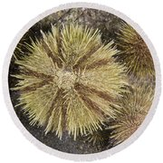 Green Sea Urchins Round Beach Towel