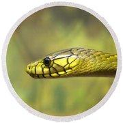 Green Snake. Round Beach Towel