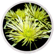 Green Spider Mums Round Beach Towel