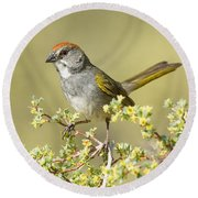 Green-tailed Towhee Round Beach Towel