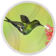 Green Thorntail Hummingbird Round Beach Towel