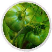 Green Tomatos Round Beach Towel