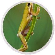 Green Tree Frog Climbing Round Beach Towel