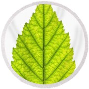 Green Tree Leaf Round Beach Towel