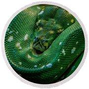 Green Tree Python Curled Round Beach Towel