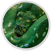green tree python Macro Round Beach Towel