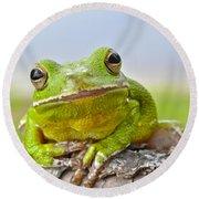 Green Treefrog Round Beach Towel