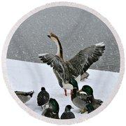 Green Valley Ducks Round Beach Towel